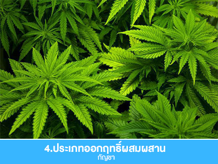 ประเภทของยาเสพติดมีอะไรบ้าง 4